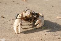 Same Lobster