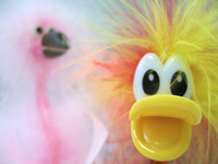 Strange Bird 2