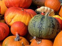 Pumpkins in fall 8