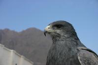 Blue Hawk 2