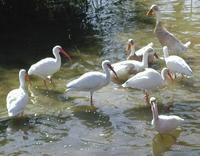Water Birds 3