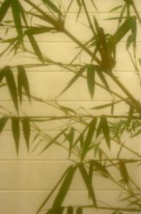 China at my window 1