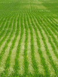 Green Rows