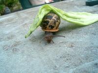 Snail Days 2