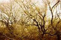 scary tree 2