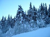 voss ski session 20