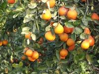 orange_ 3