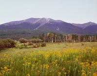 Mt. Humphrey 1