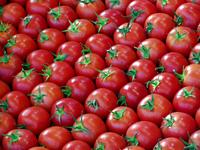 Organized Tomatoes