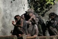 Monkey family 3