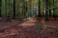 Autumn - HDR