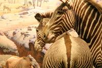 nyc natural history museum