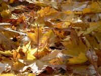 autumn0 7
