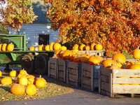 Pumpkins and Pumpkins