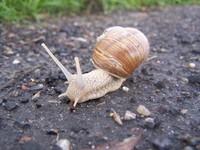 Snails on the run 2