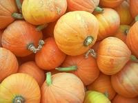 Pumpkins at Keremeos market
