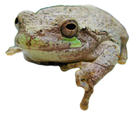Frog Isolation 2