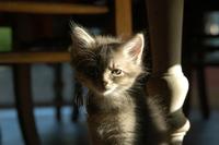 Cat story 10