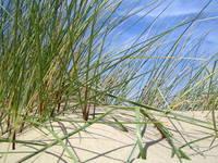 dunes & grass