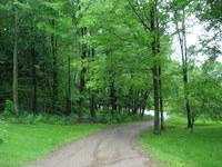 Vermont Woods 10