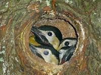 woodpecker_ 2