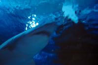 respect the shark I