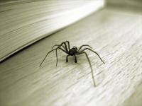 Huge spider in front of book