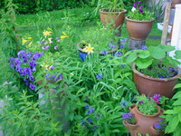 Pots with varius content