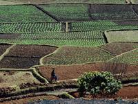 Early-Season Malagasy Cropfields
