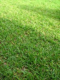 grassland 1