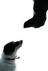 Look Dog, look
