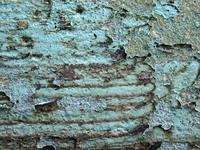 texture - blue peeling paint