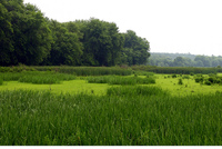 Summer Wetlands