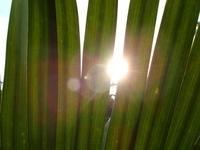 Sol entre as folhas