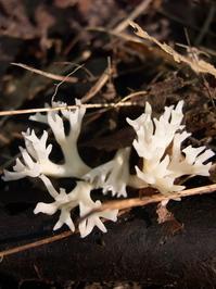 Pretty Fungus Series 1