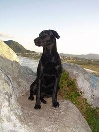 Caya - Labrador 2
