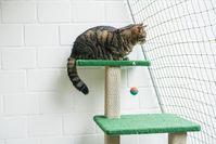 cat on cat tree