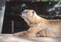 Animals in Stanley Park Zoo 5