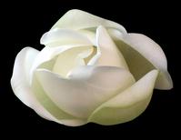 ficus flower 2