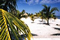 palm trees & beach