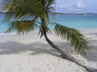 Tropical BeachTree