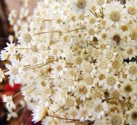 white_Flower 2