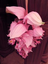 bic flower