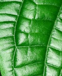 Various Plants 1