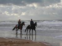 Horses at Sea