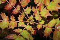 Spikey Leaf