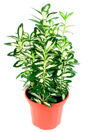vase with plant 1