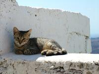 Santorini cat 3