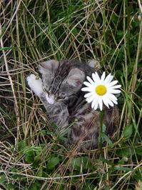 Mew-flower
