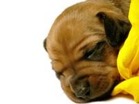 Cute cute dog ! 2